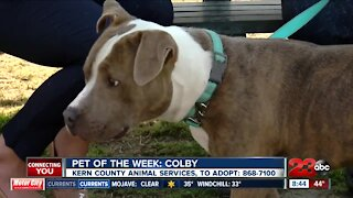 Pet of the Week: Colby