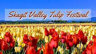 Skagit Valley Tulip Festival 2019