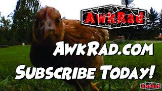 AwkRad.com Promo