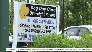 Local dog daycare is giving back, despite drop in business