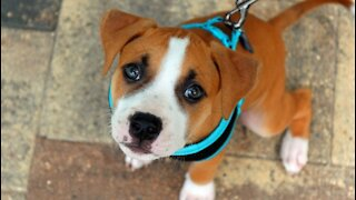 on leash puppy training