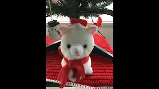 Christmas cat Loves Trump