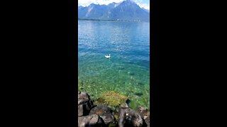 Green lake in Switzerland with white bird