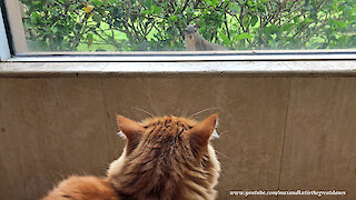 Brave squirrel teases mesmerized cat