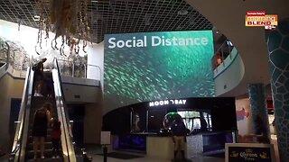 Florida Aquarium Reopens|Morning Blend