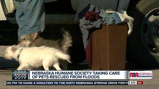 Nebraska Humane Society Flood Drive