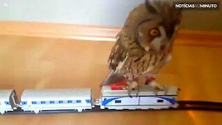 Coruja se diverte ao andar em trem de brinquedo!