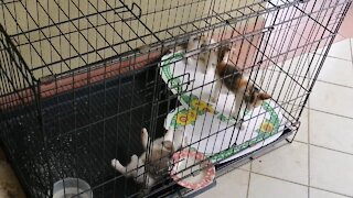 when my kittens were small and cute. play time .