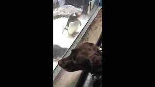 Service dog plays with penguins at the zoo