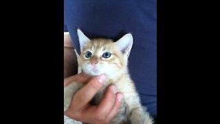 Little hungry kitten
