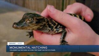 Colorado Gator Farm has its first baby gator in 16 years
