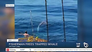 San Diego fisherman rescues whale tangled in lobster trap