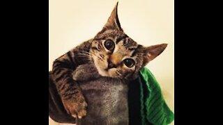 Naughty cattt