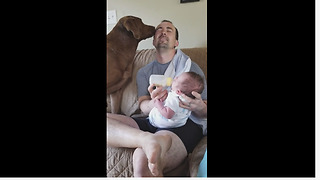 Overly Compassionate Pooch Helps Owner Feed A Newborn Baby