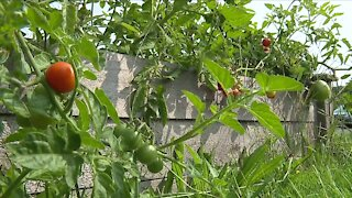 Community garden at Akron school teaching kids about healthy eating