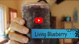 🌿 Living Blueberry Greens - Make this Easy Smoothie 🙌
