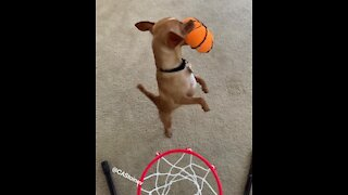 The most impressive doggy slam dunk you'll ever see