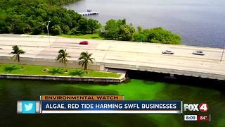 Local fisherman feel effects of green algae blooms