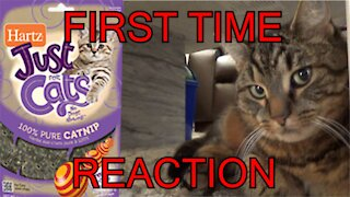 Cat given catnip - Catnip cat reaction - first time - funny