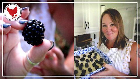 Blackberry Season! Making Homemade Cobbler