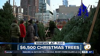Undecorated Christmas trees selling for $6,500?