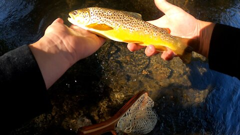 Long, Tough day of trout fishing