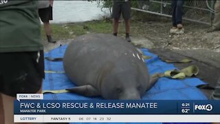 Lee County Sheriffs Office helps manatee