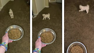 Special needs dog hilariously yells for food time