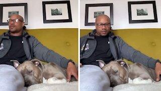 Sleeping dog hilariously wakes up to magic word