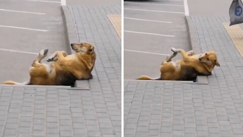 Dog shows you don't need a gym membership to exercise