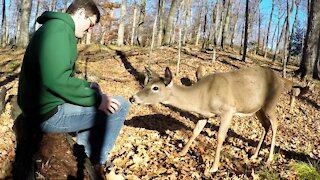 Man sits in the woods patiently for wild deer to approach