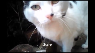 Cats wearing cameras