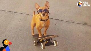 Amazing Dog Skateboarding Skills