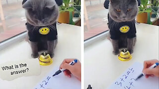 Smart cat solving math problems