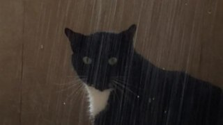 Strange cat really enjoys taking showers like a human