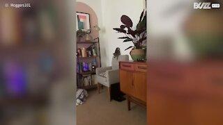Kitten's hilarious jump fail