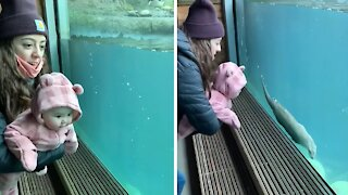 Baby can't stop laughing at swimming otter at the zoo
