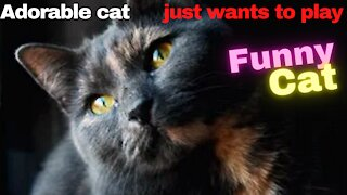 Adorable cat just wants to play funny cat I love cats