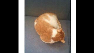 my sweet cat 🤗😱