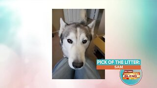 Pick of the Litter: Meet Sam!