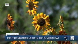 Protecting gardens from the summer heat