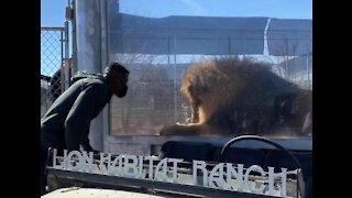 UFC fighter helps Las Vegas Lion Habitat Ranch