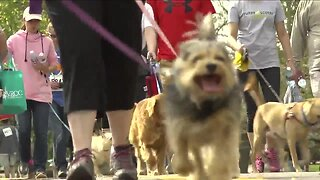 Furry Scurry walk going virtual this weekend