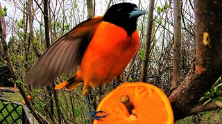 Very simple bird feeder attracts extremely beautiful birds