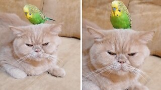 Cat & parrot pose for camera in funniest possible way