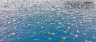 Amazing drone video of 64,000 turtles nesting