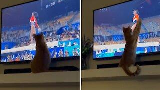Olympics-loving kitty gets mesmerized by gymnast
