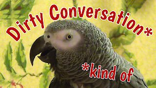 Talking parrot has inappropriate conversation with his owner