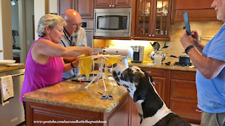 Great Dane Watches Singing Friends Have Fun Making Homemade Pasta