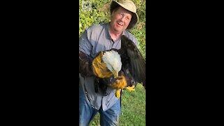 Bald Eagle rescue from Yadkin River